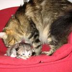Daisy 3 Jahre und 4 Monate alt mit Norwegerchen Elias 15 Tage alt