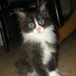 Boris 10 Wochen alt