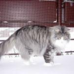 Figaro 3 Jahre und 2 Monate alt