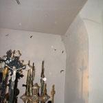 Zwergfledermäuse fliegen an warmen Tagen in den Kellern
