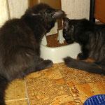Baloo 4 Monate alt mit Schwesterchen Bonnie