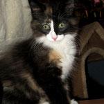 Lyra 10 Wochen alt