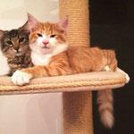 Tomcat 4,5 Monate alt