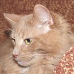 Pierroth 9,5 Jahre  alt