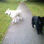 Lea mit unserem Besucherhund Charly