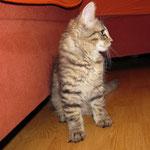 Peppone 10 Wochen alt