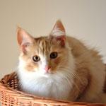 Wallace 5 Monate alt