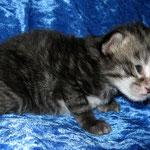 Gizmo 2 Wochen alt