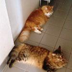 Tomcat  und Tarzan 3 >Jahre und 7 Monate alt