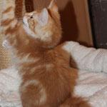 Griselda 13 Wochen alt