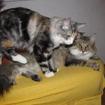 Amelie  Jahre und 3 Monate alt mit Olympia