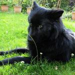 1,5 Jahre alt im Garten