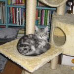 Fidelio 8 Monate alt