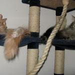 Cosmo 3 Jahre und 9 Monate  alt mit Pierroth