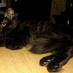 Bonnie 6 Monate alt