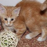 Fafnir 9 Wochen alt