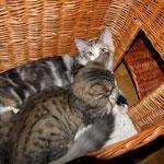 Olympia 5 Monate alt mit Peppone 4 Monate alt