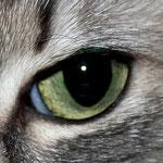 Dianas schöne grüne Augen