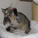 Peppone 5 Monate alt