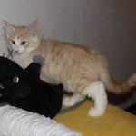 Tristan 10 Wochen alt