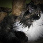 Lyra 5 Jahre alt
