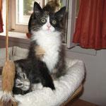 Lyra 12 Wochen alt