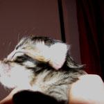 Penelope 1 Tag alt