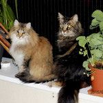 Penelope 5 Jahre und 3 Monate alt mit Coonie Galileo 8 Jahre und 9 Monate alt