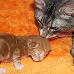 Griselda 1 Woche alt mit Tante Diana