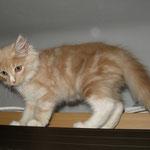 Katana 10 Wochen alt