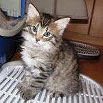Peppone 6 Wochen alt
