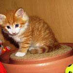 Tomcat 6 Wochen alt