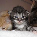 Ursus 2 Wochen alt mit Tristan