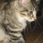 Athina 12 Wochen alt