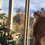 Tomcat 3 Jahre und 2 Monate alt