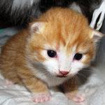 Tomcat 2 Wochen alt