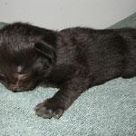 Baloo 2 Wochen alt