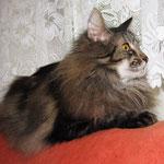Cosmo 9 Jahre  und 2 Monate alt