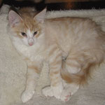 Tristan 12 Wochen alt