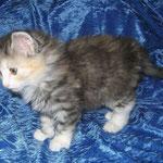 Fabricia 6 Wochen alt