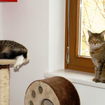 Violetta 1 Jahr alt mit Hauskatze Strizzi
