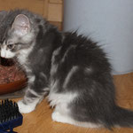 Hieronymus 11 Wochen alt