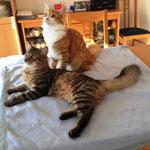 Tomcat und Tarzan 6,5 Monate alt