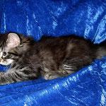 Humphrey 8 Wochen alt