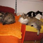 Amelie 9 Jahre und 5 Monate alt mit Froya und Elida