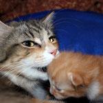 Fafnir 2 Wochen alt mit Mama Yasmine
