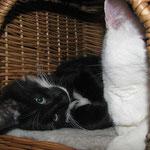 Sir Galahad 3 Monate alt mit Murphy