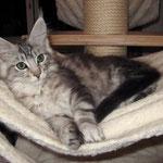 Mephisto 12 Wochen alt