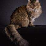 Peppone 5 Jahre und 8 Monate alt
