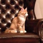 Tomcat 3,5 Monate alt